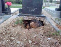 La foto ha fatto il giro del web e ha commosso gli utenti di mezzo mondo. Alcuni hanno anche scritto al custode per adottare il cane, rimasto senza padrone.