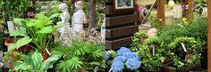「ハンズマンで春を満喫!」5: ハンズマンの植物コーナーは屋根が開閉式になっていて、自然光がたくさん入ってきます。  春の陽気を浴びる生き生きとした花や葉には生命力を感じます♪