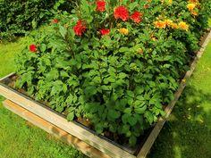 Er du lei av mordersneglen blant blomster og bær? Bygg da dette geniale og enkle høybedet med innebygget dobbeltvern mot sneglene.