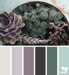 Shades of succulents