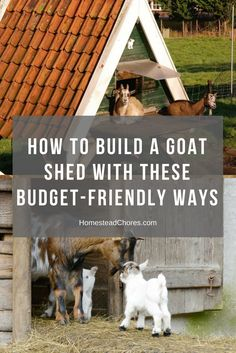 how to build a goat shed