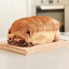 That is SO cruel to let a dog get that obese and miserable!!! Poor doggie, looks like a loaf of bread!