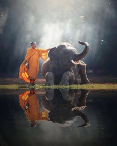 """18.3k Likes, 127 Comments - Naked Planet (@nakedplanet) on Instagram: """"Monk and Elephant in the Thailand countryside PC: @sasintipchai"""""""