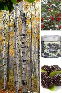 Blackberry Cedar Leaf -  Autumn forest spruce and white birch essence combine with deeply rich blackberry and sweet holly berry to create this aromatic wonder