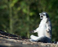 Inspiração Fotográfica: Yoga Animal!