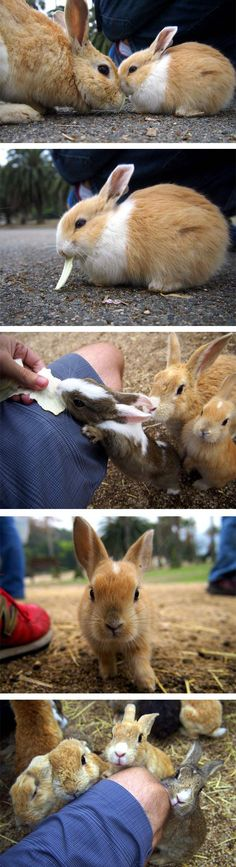 There's a a small island located in the Inland Sea of Japan that is completely overrun with cute, fluffy bunnies who are the island's main i...