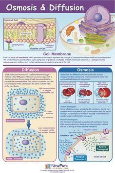 Osmosis & Diffusion