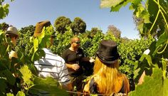 Looking for the coolest wine tours in Cape Town? Book with the best in the business, Wine Flies Wine Tours, for an unforgettable experience.