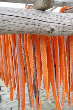 "Strips ""Keyes Fish Camp, Lower Yukon River, Alaska. King salmon is prepared in this manner by Yup'ik Eskimos at family fish camps along the River. It is shown here drying. From here it goes to a smokehouse for a light smoke. ""Strips"" are the most important (and most delicious) Yup'ik subsistence food."""