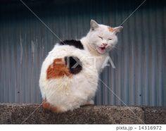 挨拶しているような三毛猫