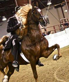WGC Marc Of Charm American Saddlebred, Charmed, Horses, Animals, Animales, Animaux, Animal, Animais, Horse