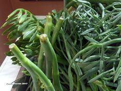 Green Beans, Vegetables, Plants, Recipes, Food, Recipies, Essen, Vegetable Recipes, Meals