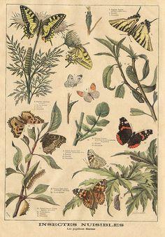 butterflies || le petit journal 27 juin 1897