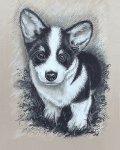 Items similar to Corgi Puppy Giclee. Original drawn in black and white Charcoal. x or x Giclée Art Print on Etsy Charcoal Art, White Charcoal, Charcoal Drawing, Teacup Pigs, Black And White Drawing, Artist Trading Cards, Small Birds, Large Animals, Hunting Dogs