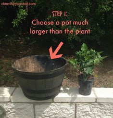 How you can Pot Hibiscus Step simply by Step the simplest way! Give your own beautiful hibiscus a the good starting pointing to ensure it stays healthy plus beautiful! Hibiscus Shrub, Hibiscus Tree, Hibiscus Garden, Hibiscus Plant, Hibiscus Flowers, Lilies Flowers, Hawaiian Flowers, Exotic Flowers, Purple Flowers