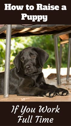 Dog Training Tips If you work full time, raising a puppy can be difficult, there's no getting around this fact, but it can be done with the tips and advice in our guide. - What to do with puppy while at work or on a full time job? Cute Kittens, Puppy Training Tips, Training Your Dog, Potty Training, Training Classes, Crate Training, Training Pads, Agility Training, Dog Agility
