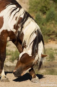 Picasso Horse | Picasso Scratches Fine Art Wild Horse Photograph by WildHoofbeats