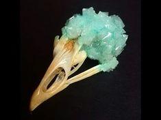 How to Grow Borax Crystals on a Skull Bird Skull, Cow Skull, Skull Art, Borax Crystals, Diy Crystals, Growing Crystals, Diy Crystal Growing, Crystal Making, Crane