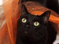 Honorable Mention:  Black Cat Lola $5 Donation to Humane Society for Hamilton County