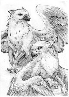 griffin pencil drawing