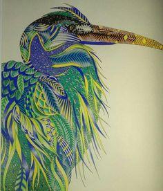 Animal kingdom - Millie Marotta - Inspiration