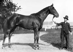 Man o' War, (1917-1947), is considered one of the greatest Thoroughbred racehorses of all time. During his career he won 20 of 21 races and over two hundred thousand dollars in purses. He was by Fair Play from, Mahubah, by U.K. Triple Crown Champion Rock Sand.