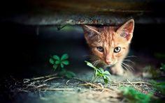 Red Kitten Hide And Seek
