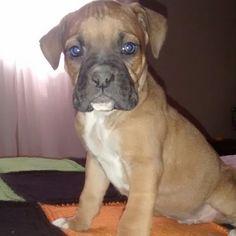 Boxer... Me llamo jack y estoy mirando la tele en la cama!