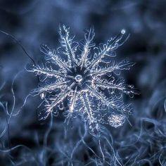 Snow flake, snow crystal