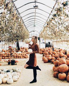 Pumpkin Graveyard – Makenna Alyse