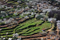 Valle del Jerte. Extremadura. Spain