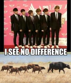 Today's photo of the day, courtesy of taemilk, features Exo-M rolling like buffalos! Well not literally... but fans will get this reference, haha. I see no difference.