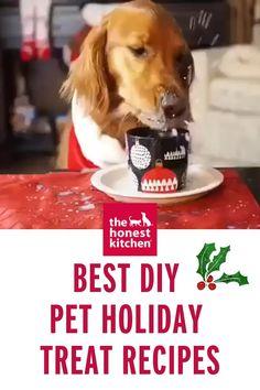 Pet Treats, Diy Stuffed Animals, Holiday Treats, Homemade, Pets, Recipes, Animals And Pets, Home Made, Rezepte