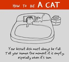 Your biscuit dish must always be full. Tell your human the moment it is empty, especially when it's Crazy Cat Lady, Crazy Cats, I Love Cats, Cool Cats, How To Cat, Cat Info, Cat Comics, Owning A Cat, Cat Behavior