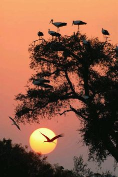 Resting in the tree. - Sandra Velazquez - Google+