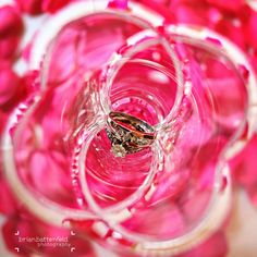 Wedding ring shot in champagne above rose pedals.