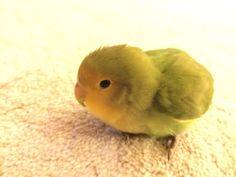 Green marshmallow or bird? I'm not sure. :) mod: marshmallow bird!