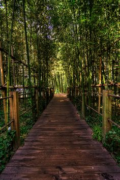 Bamboo forest, Korea | by Jason Teale on 500px