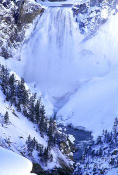 Frozen In Time, Yellowstone National Park