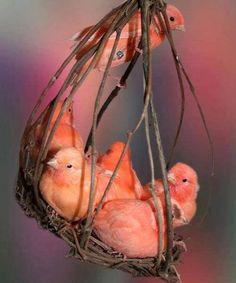 Coral Birds