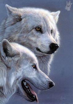 169 Mejores Imágenes De Lobos Maravillosos Wolf Pictures