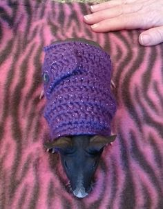 Guinea Pig Sweater Skinny Pig Sweater by EnchantingCreations7