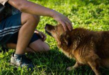 Magas intelligenciáról árulkodik, ha beszélgetsz házikedvenceiddel Puppy Training Schedule, Dog Training, Training Tips, Cute Dogs And Puppies, Pet Dogs, Most Expensive Dog, Dog Separation Anxiety, Education Positive, Dog Runs