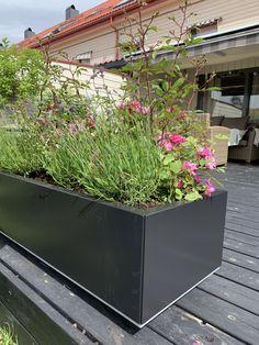 Plants, Patio, Plant, Planting, Planets