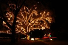 James Island Lights Impressive Festival Of Lights At James Island County Park In Charleston South Decorating Design