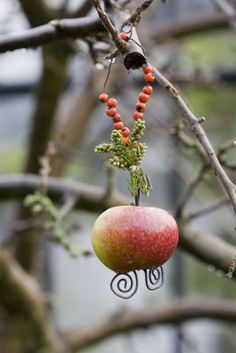 A hanging apple for birds
