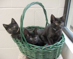 one can never have too many black cats!