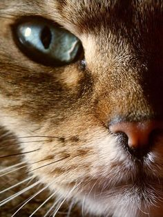 Ideas eye close up photography big cats for 2019 Close Up Photography, Animal Photography, Nature Photography, Sweets Photography, Digital Photography, Big Cats, Cats And Kittens, Cute Cats, Eye Color Chart Genetics