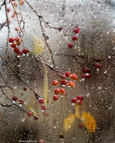 Autumn Rain, Autumn Nature, Autumn Garden, I Love Rain, No Rain, Fall Wallpaper, Nature Wallpaper, Autumn Flowering Plants, Gif Lindos