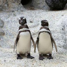 Penguins at San Francisco Zoo. HAPPY NEW YEARS!